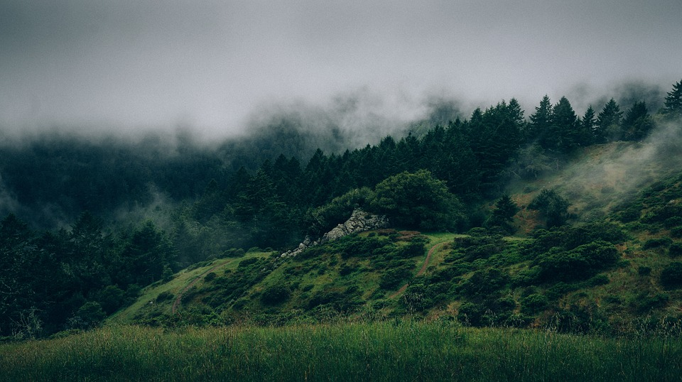 Wald mit Nebel - Grüner Dampf