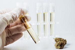 Reagenzglas und Hanfblüte - CBD Öl