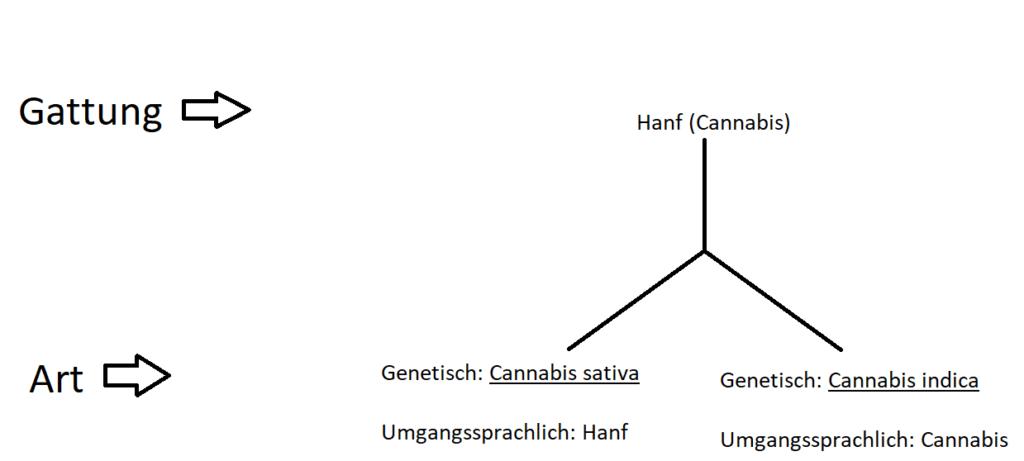 Hanf und Cannabis in der Systematik der Lebewesen; Was ist der Unterschied zwischen Hanf und Cannabis